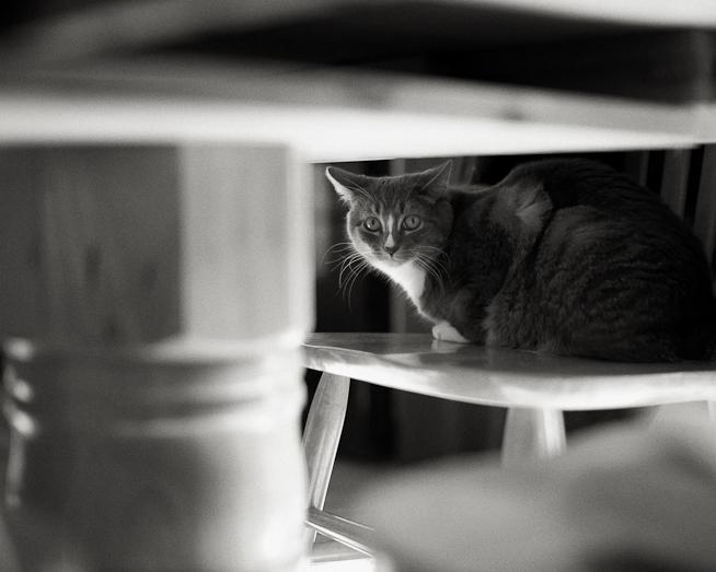 Jenni Under the Table