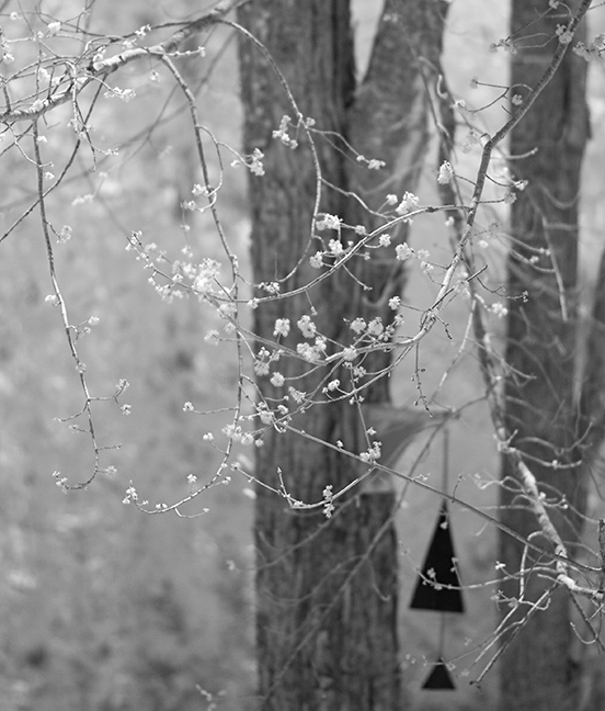 Red Maple Buds and Buoy Bell