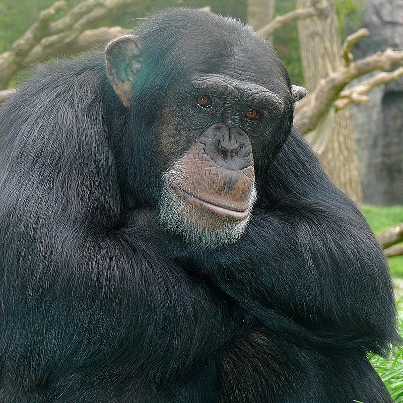 Kendal - NC Zoo