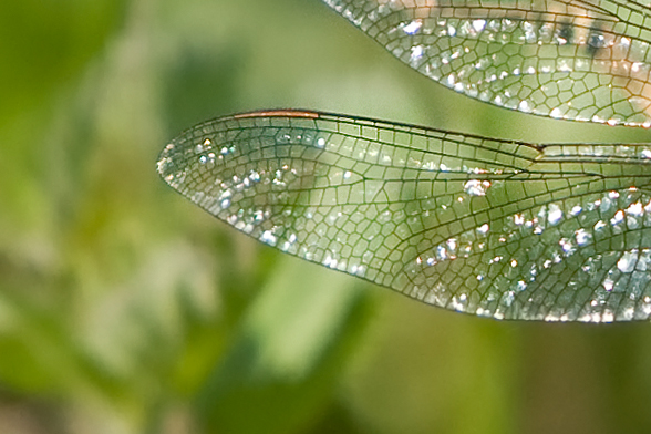 _MG_2598detail vleugel.jpg