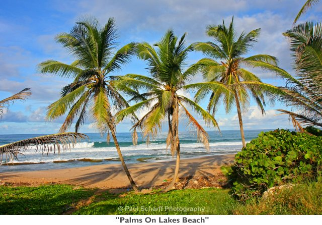 034  Palms On Lakes Beach.jpg