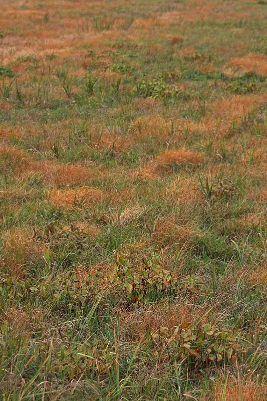 Meadows travnik_MG_2573-1.jpg