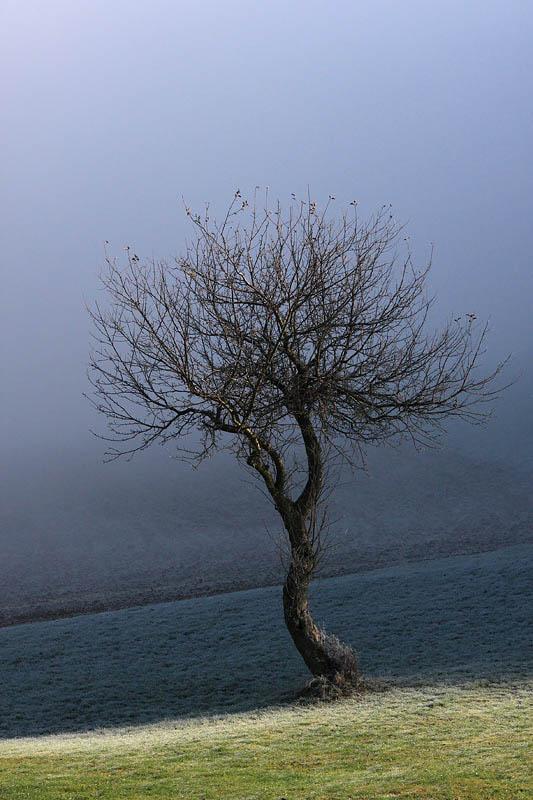 Tree drevo_MG_3198-11.jpg