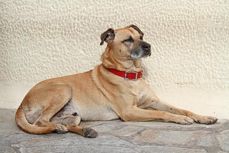 Dog pes_MG_2448-11.jpg