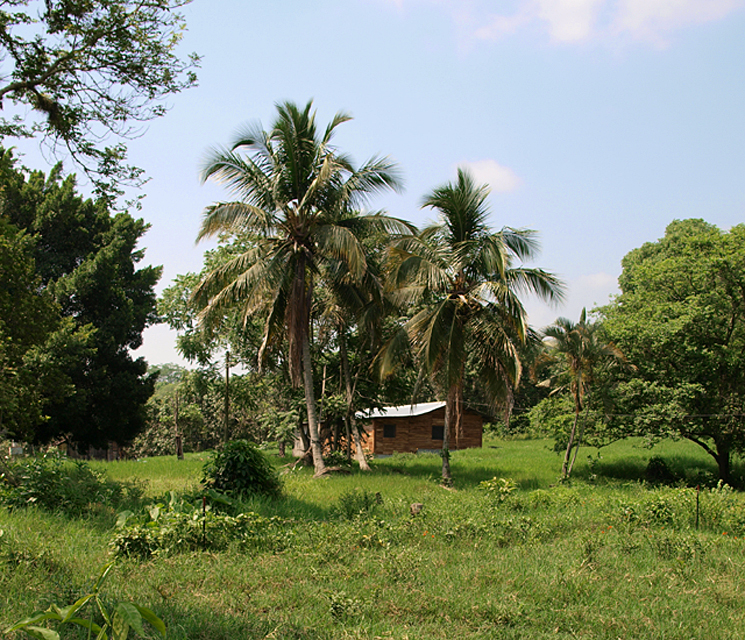 Tropical Ranch House, Olypus E-420