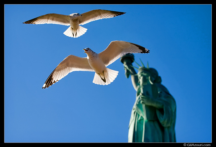 Gulls and the Statue of Liberty