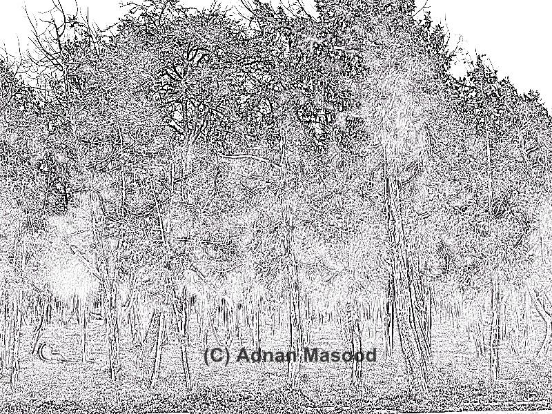 Trees_sketch.jpg