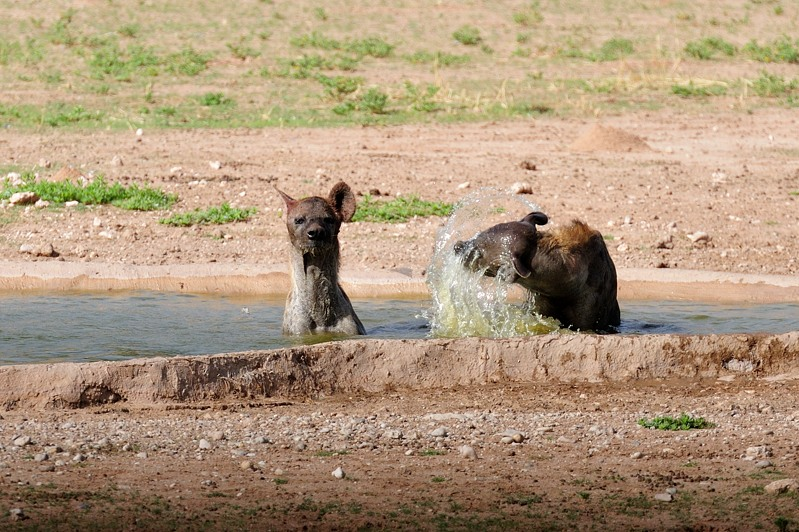Hyena II 2.jpg