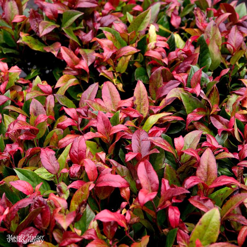 8 - Leaves