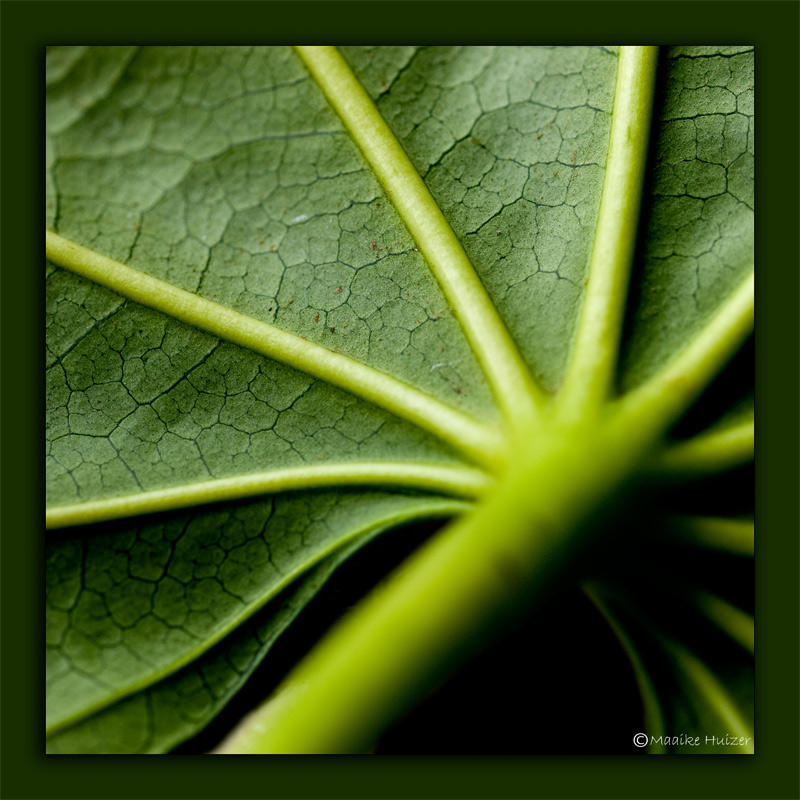 May 2nd: Under the Leaf
