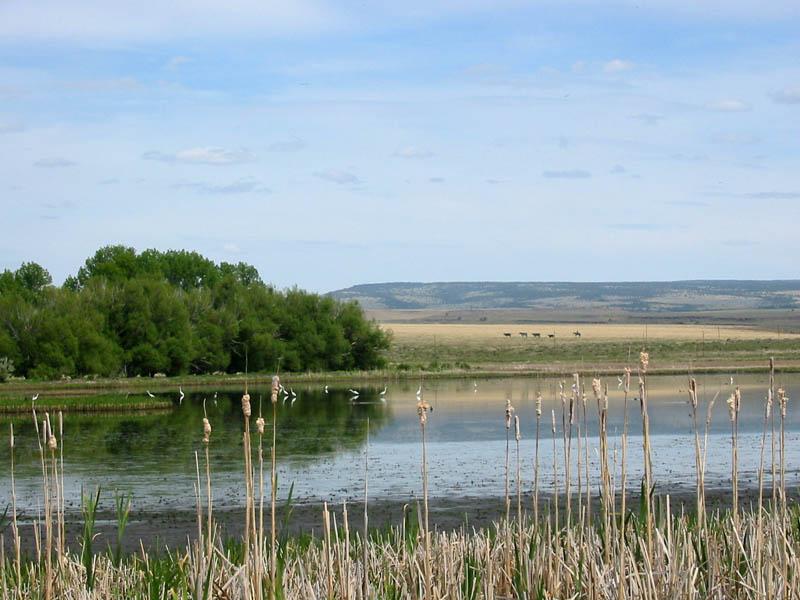 Benson Pond, Malheur NWR, Oregon