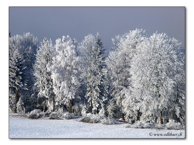 Wintertag / winter day (0948)