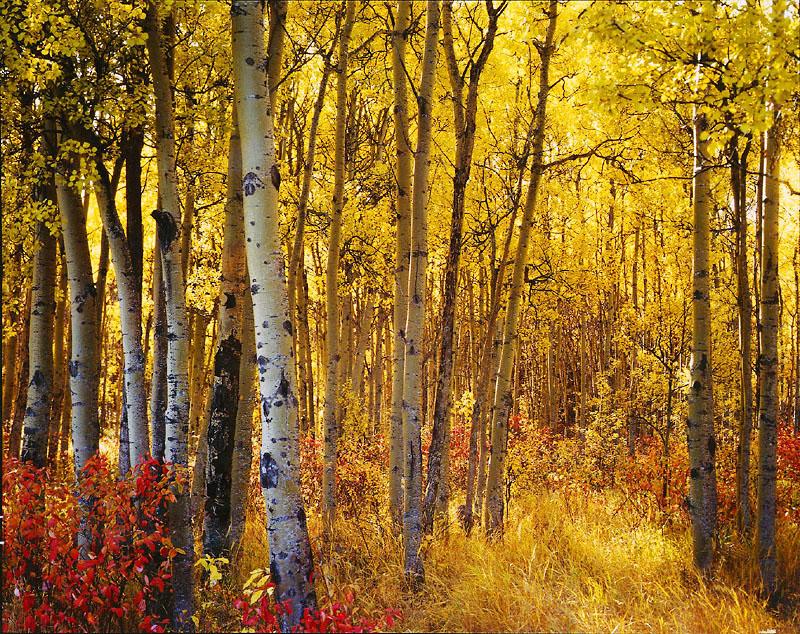 Autumn original.