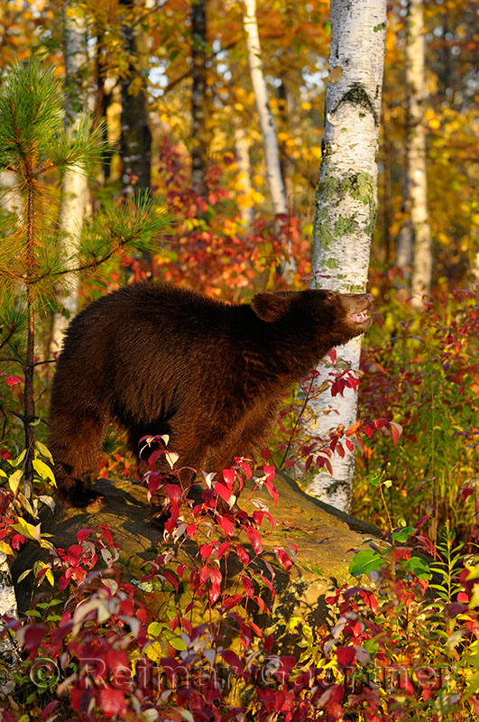177 Bear 1.jpg