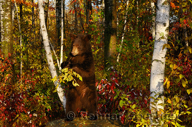 177 Bear 7.jpg