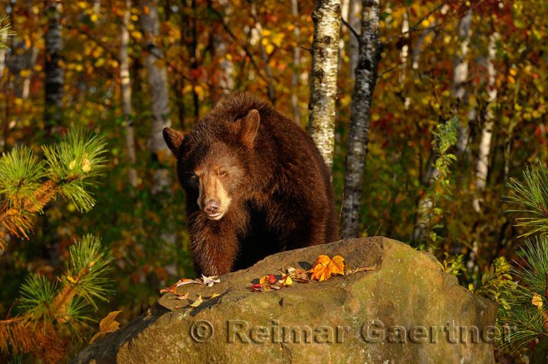 177 Bear 9.jpg