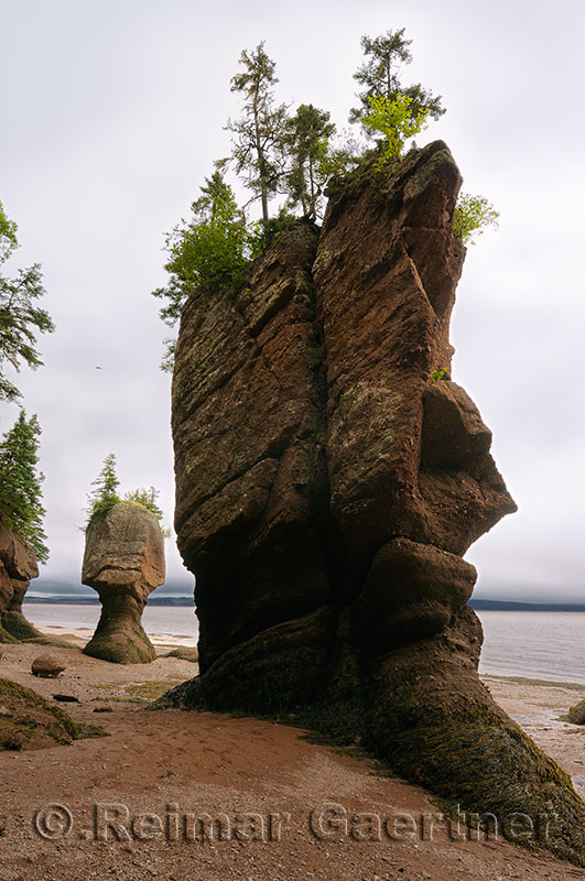 Face of ET and Motherinlaw flowerpot sea stacks at Hopewell Rocks Bay of Fundy New Brunswick