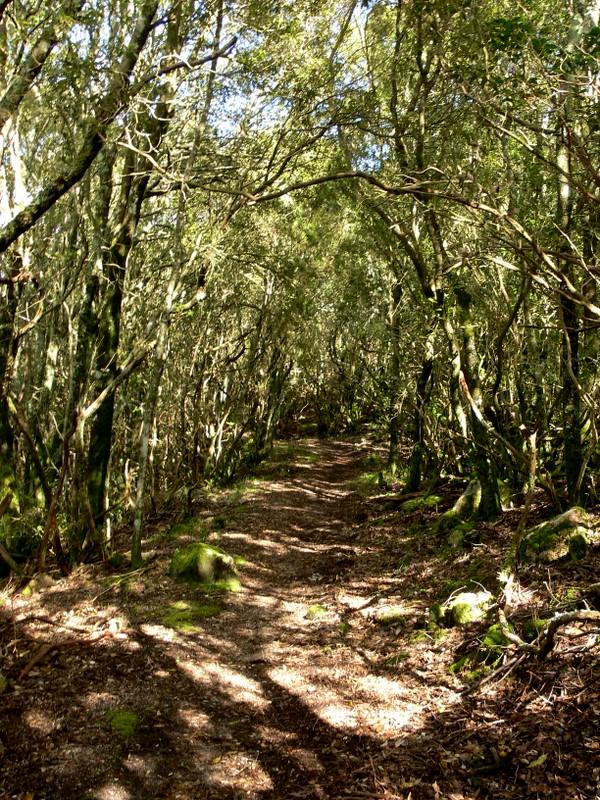 a sunny path.