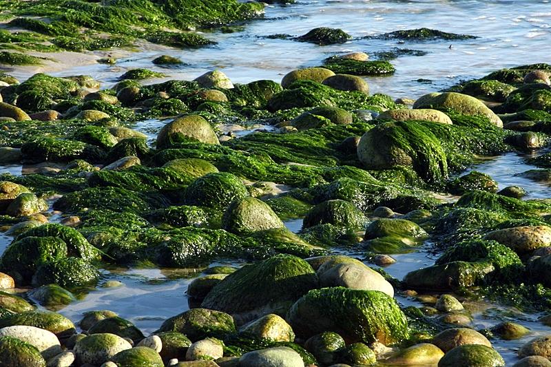 Ocean plantlife