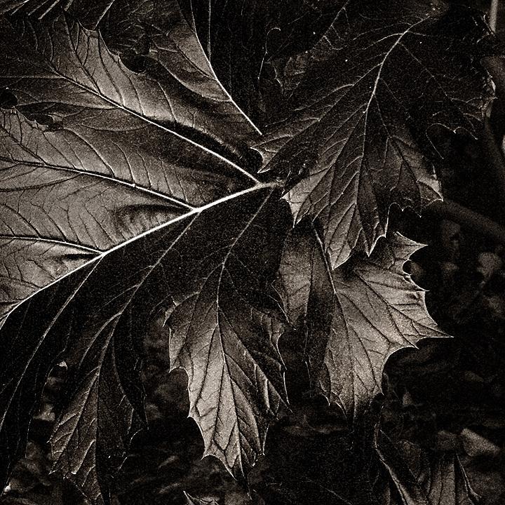 Dark Side Layers