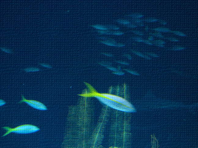 Schooling Fishtank 1