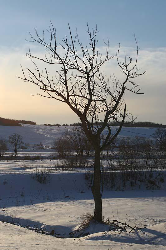 Icy lonelyness / Solitude glaciale