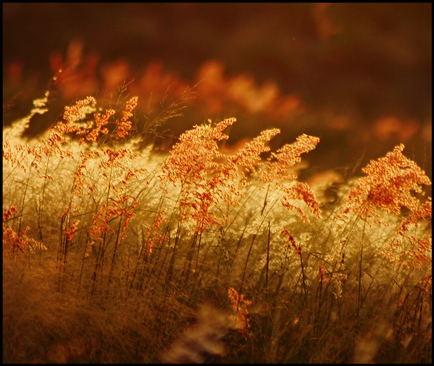 Sunset-grasses.jpg