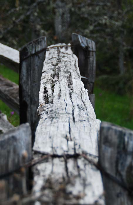 The old split rail