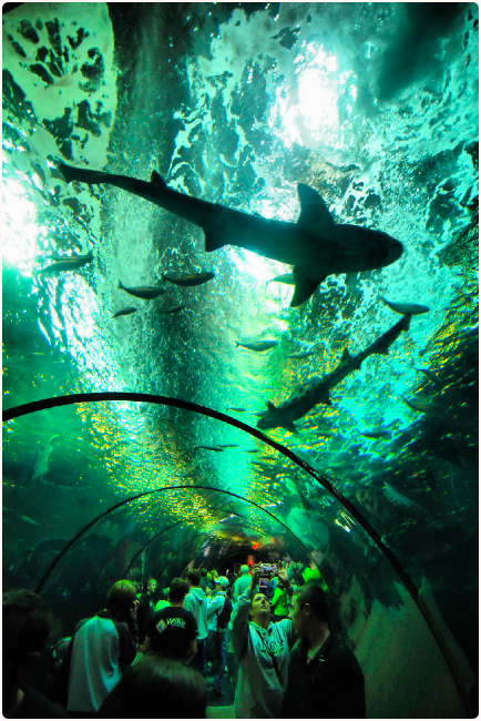 Sharks and their Wished-For Prey, Oregon Coast Aquarium