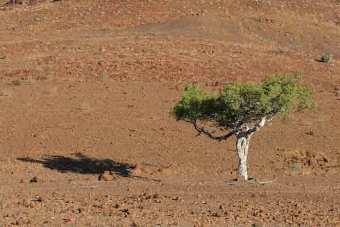 Namibia-Lonely Tree-1.jpg