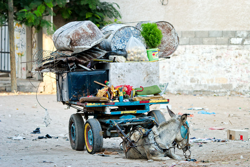 Donkey and cart - Gaza