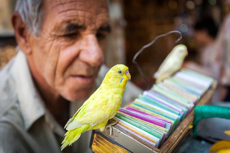 Fortune teller and his birds - Shiraz
