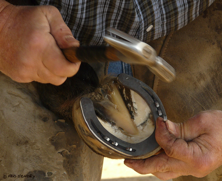 Farrier -  Hammering the shoe on