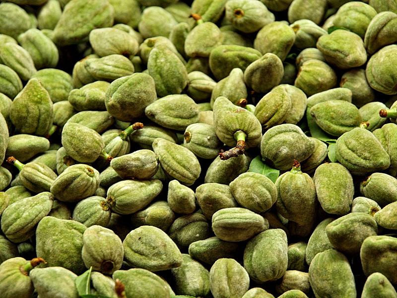 green almonds2.jpg