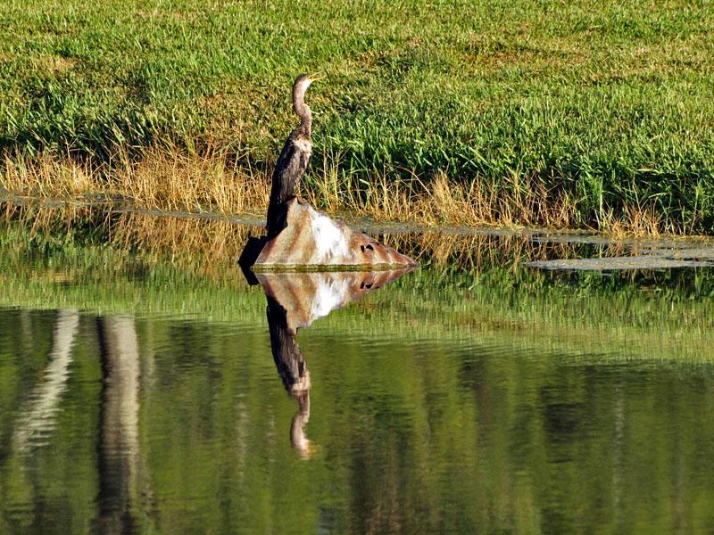 P8211740_bird rock reflection.jpg