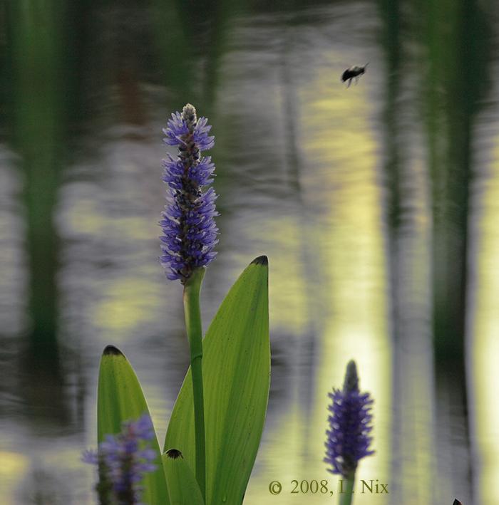 Water-Flora-B