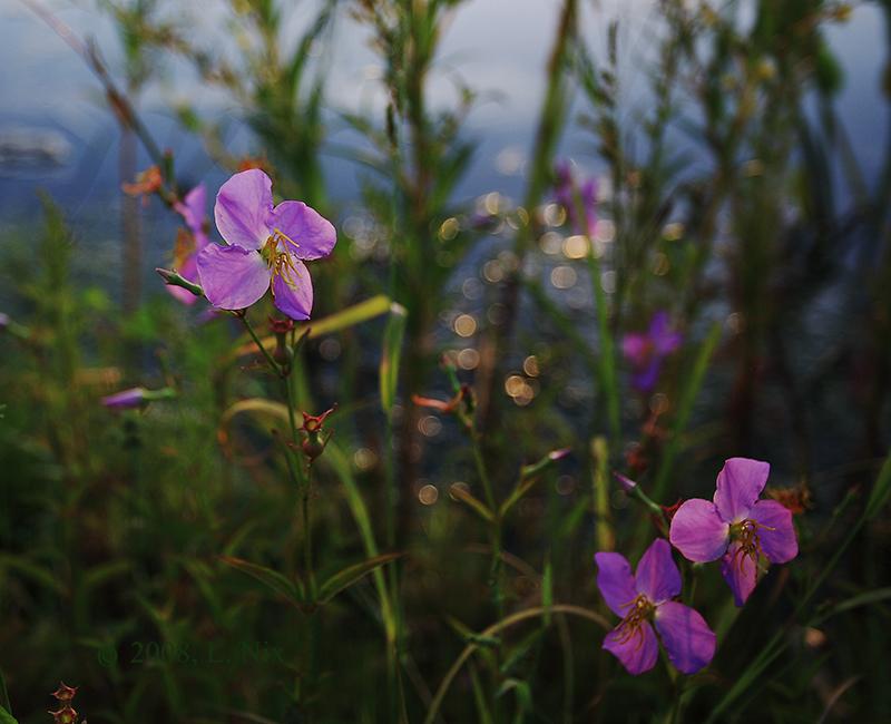 Waterside Wildflowers 2