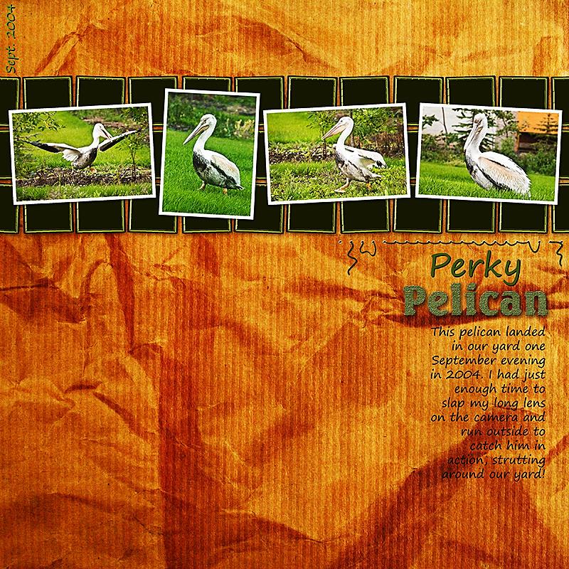 Perky Pelican