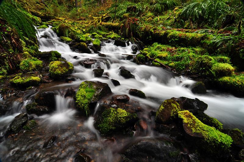 Mineral Creek, Study 2