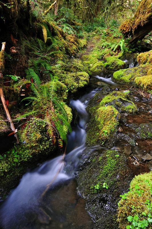 Stream along Graves Creek Trail