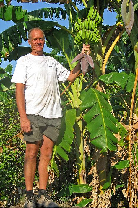 Wim in de bananenplantage