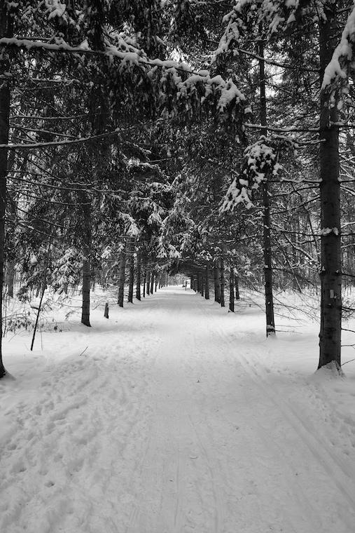 Sheppards Bush Path