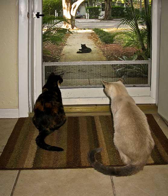 Phantom & Bradley (and local neighbor)