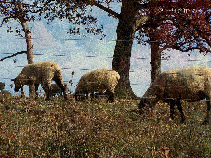 Wool Grazing!