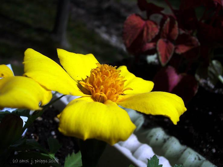 Pretty Yellow Flower!