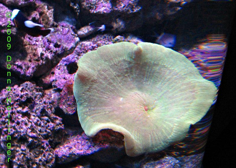 aqauri.3.0885.jpg