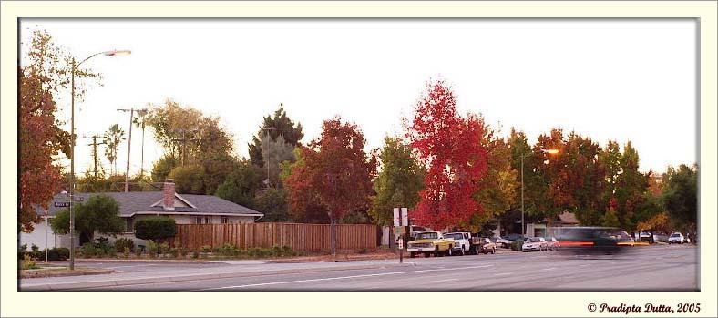Californias Fall Color :-)