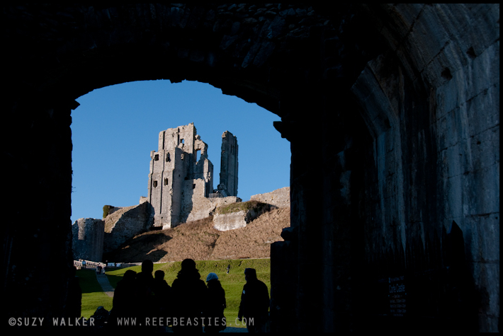 Corfe Castle, Entrance