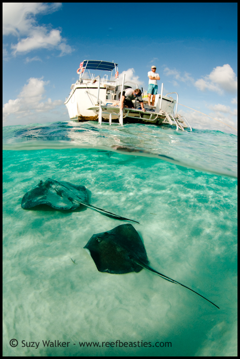 2 Rays and a boat