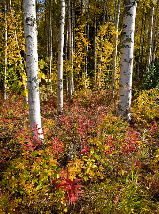 08-09 Fairbanks Fall 06.JPG